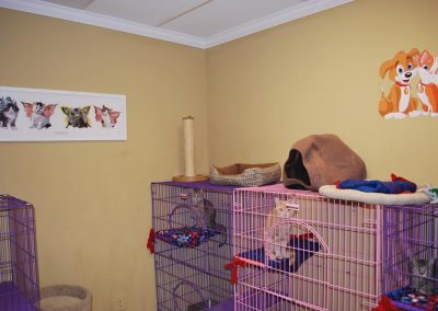 Kitty Adoption Room